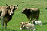 La alimentación animal, clave para nuestrasalud